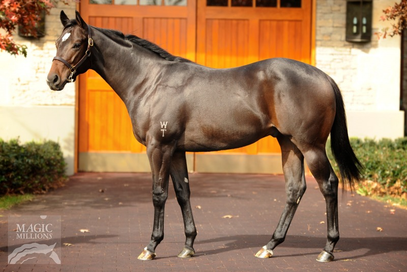 Tocco D'oro at 2016 Gold Coast National Yearling Sale