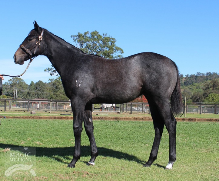 Exclusive at 2016 Gold Coast National Weanling Sale