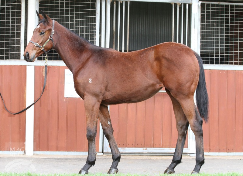 Fight For Love at 2016 Gold Coast National Weanling Sale