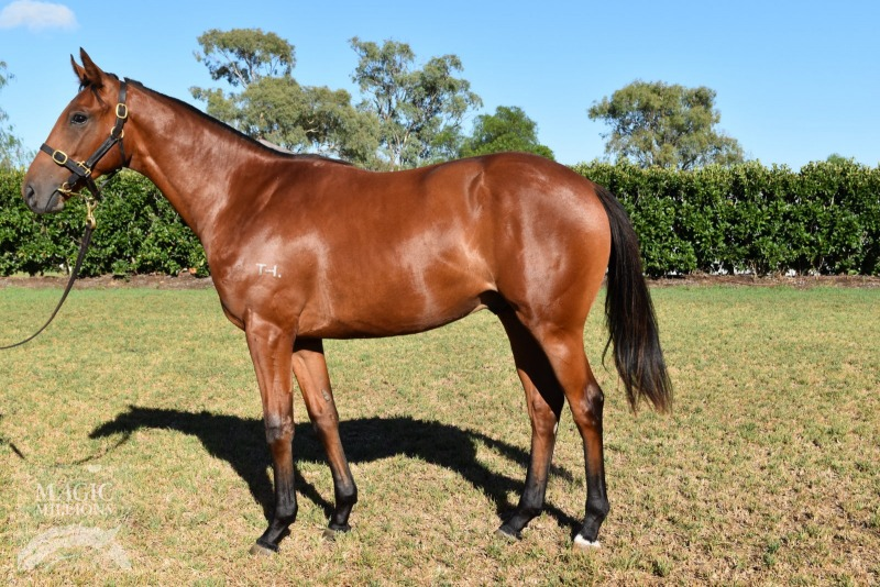 Blinkin Nomore at 2016 Gold Coast March Yearling Sale