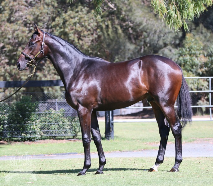 Super Swoop at 2016 Adelaide Yearling Sale