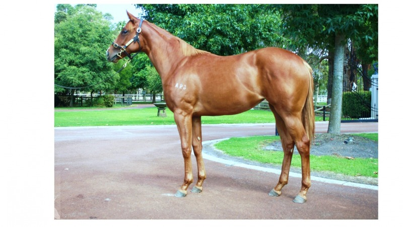 Amelie Argot at 2016 Perth Yearling Sale