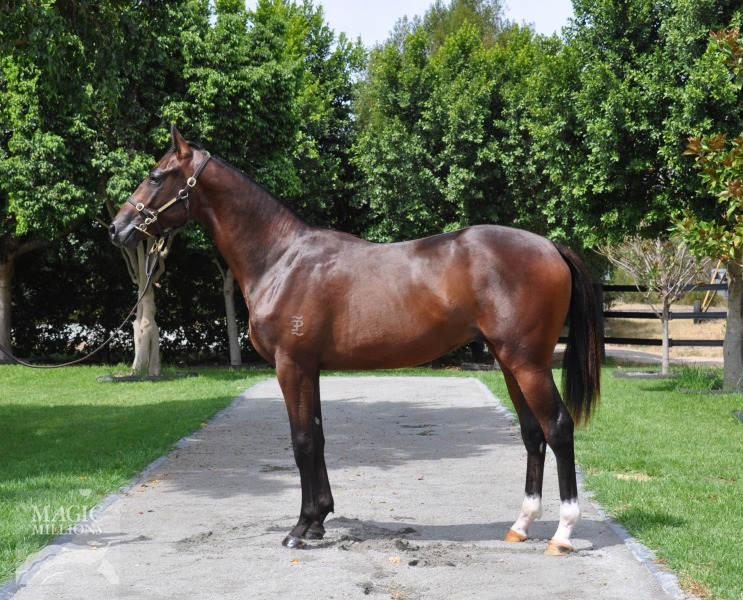 Spookwood at 2016 Perth Yearling Sale