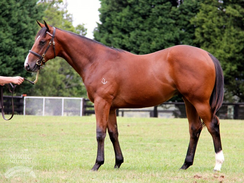 Will's Bid at 2016 Gold Coast Yearling Sale