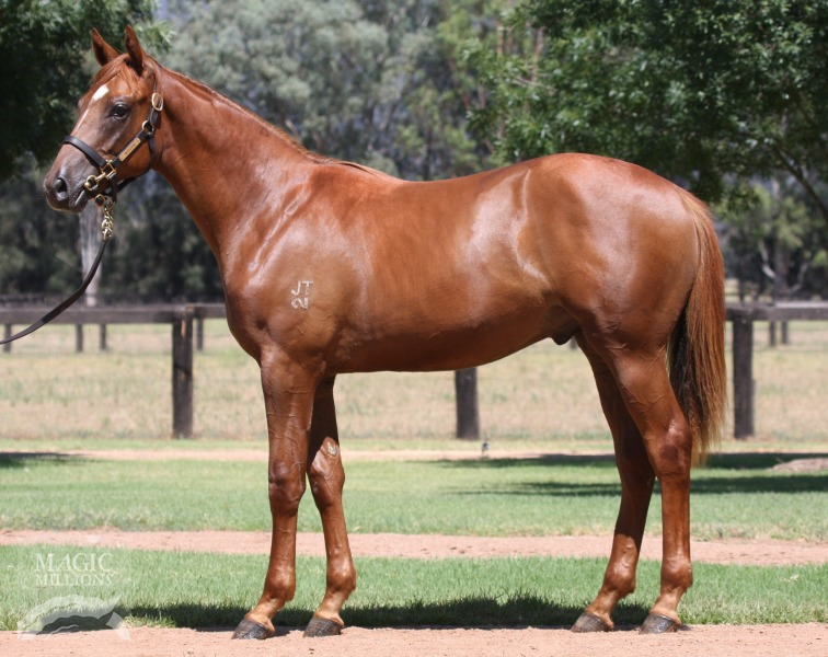 Achilles Pride at 2016 Gold Coast Yearling Sale