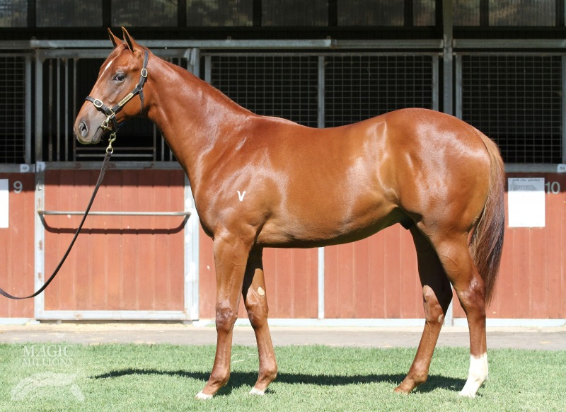 Domination at 2016 Gold Coast Yearling Sale