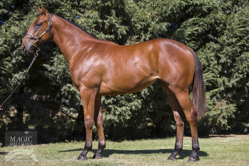 The Consigliere at 2016 Gold Coast Yearling Sale
