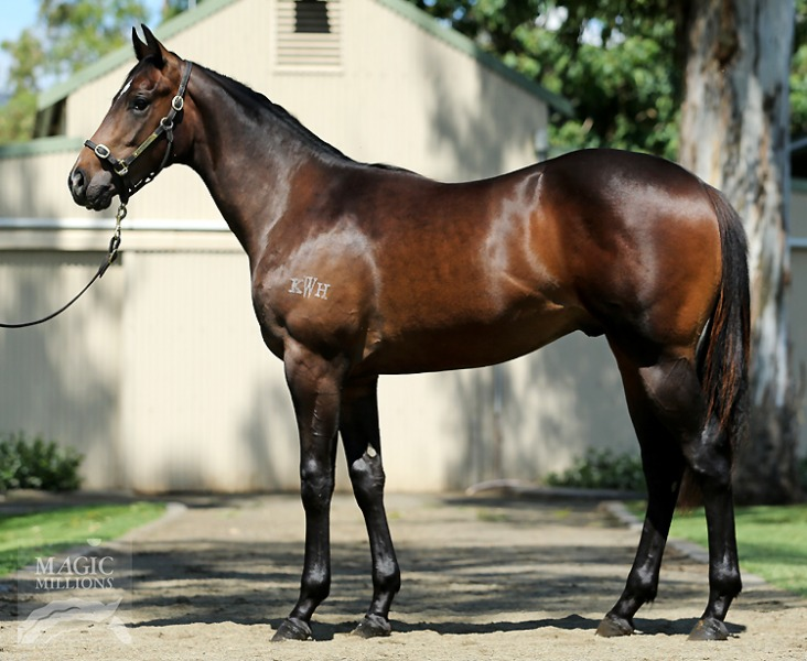 Another Sin at 2016 Gold Coast Yearling Sale