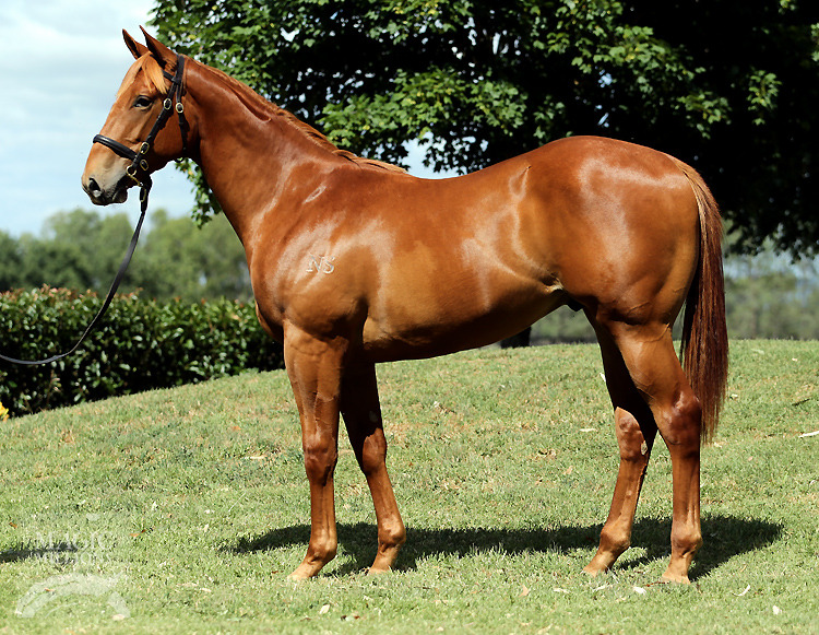 Stanley Park at 2016 Gold Coast Yearling Sale