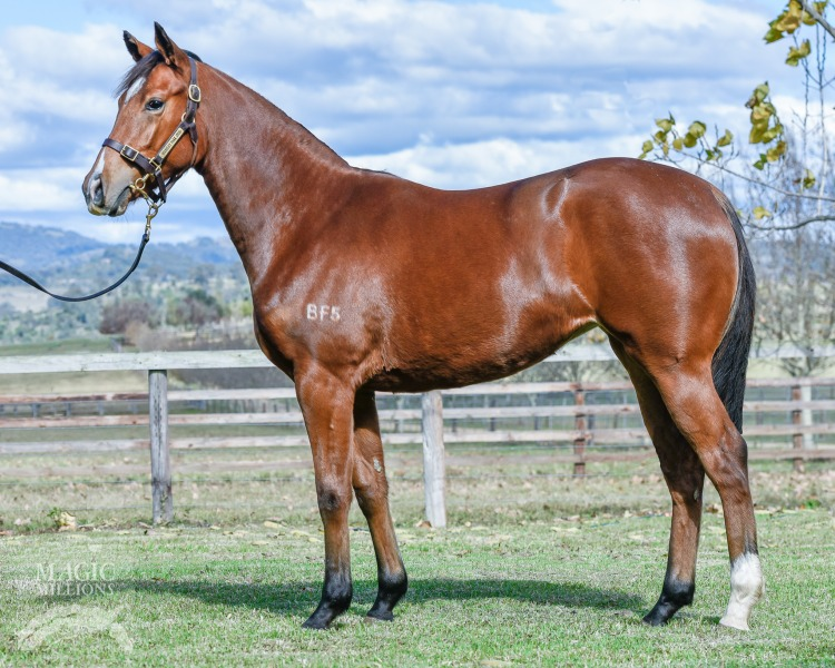 Oh Cecilia at 2017 Gold Coast National Yearling Sale