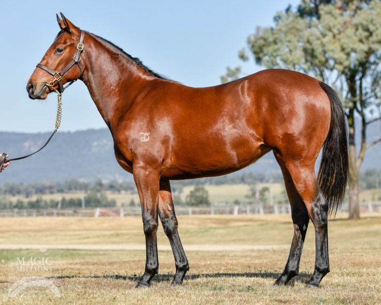 A Fortunate Lass at 2017 Gold Coast National Yearling Sale