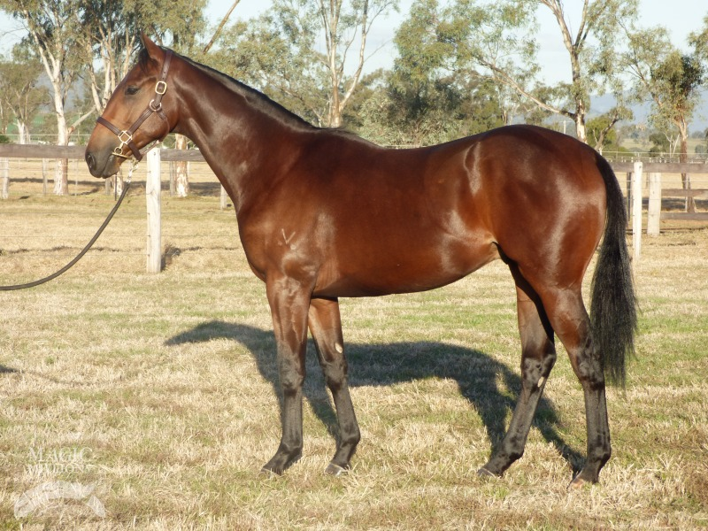 Supreme Plus at 2017 Gold Coast National Yearling Sale