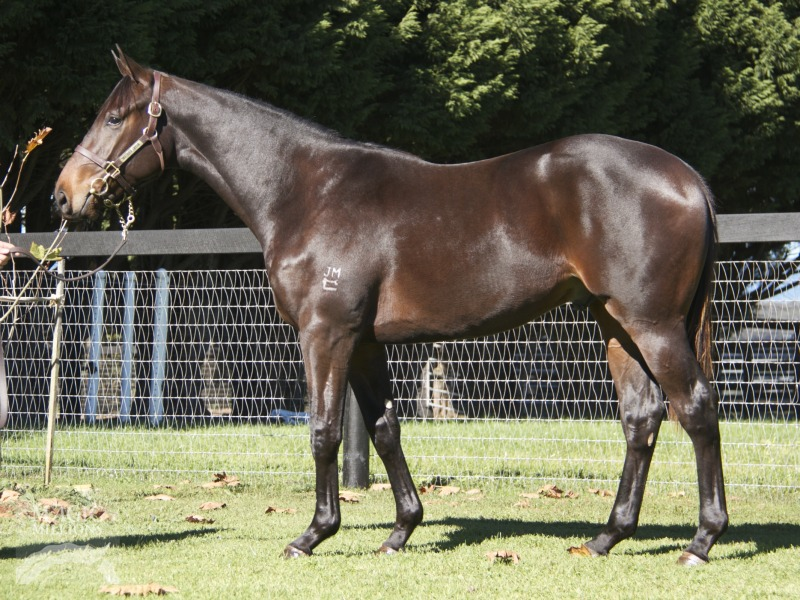 Prestissimo at 2017 Gold Coast National Yearling Sale