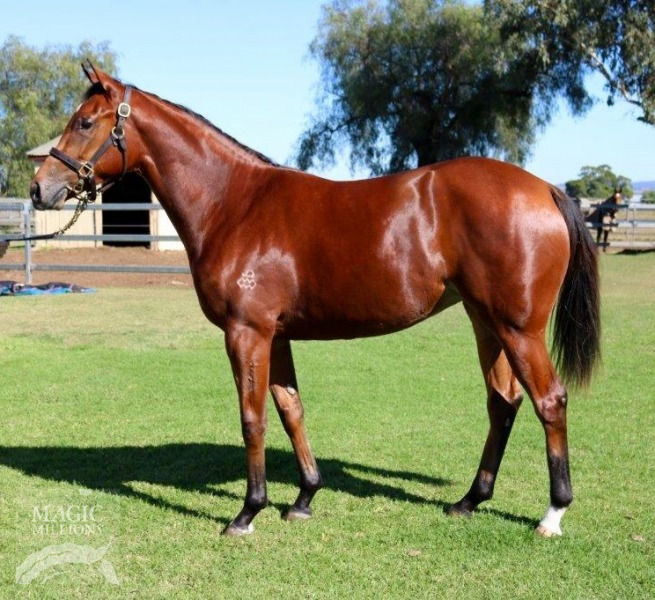Don't Doubt Lara at 2017 Gold Coast National Yearling Sale