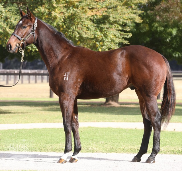 Cliff's Choice at 2017 Gold Coast National Yearling Sale