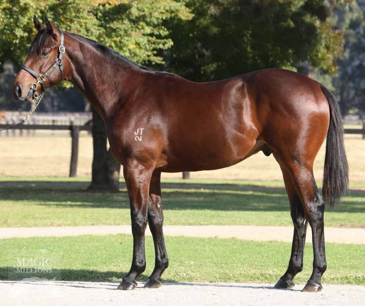 Blue Comet at 2017 Gold Coast National Yearling Sale