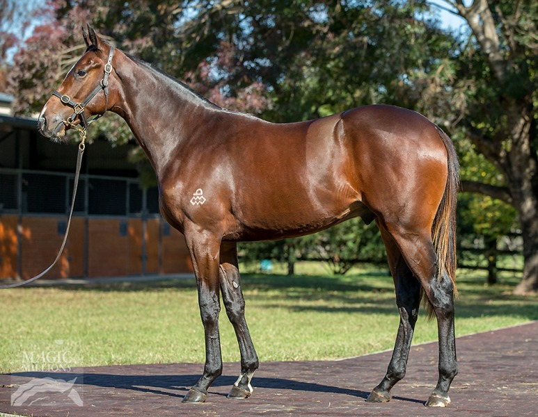He's The Deel at 2017 Gold Coast National Yearling Sale