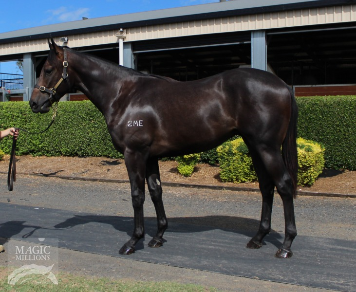 Alpine Dancer at 2017 Gold Coast March Yearling Sale