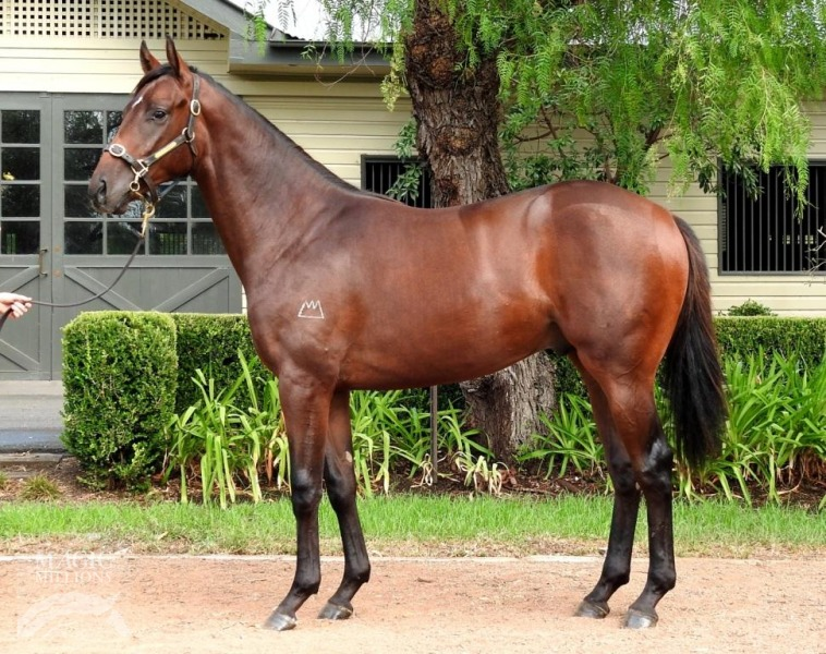 Rohlon Drunk at 2017 Adelaide Yearling Sale