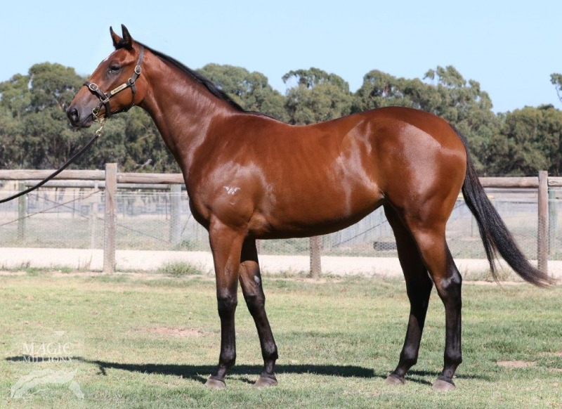Ima Puppet at 2017 Adelaide Yearling Sale