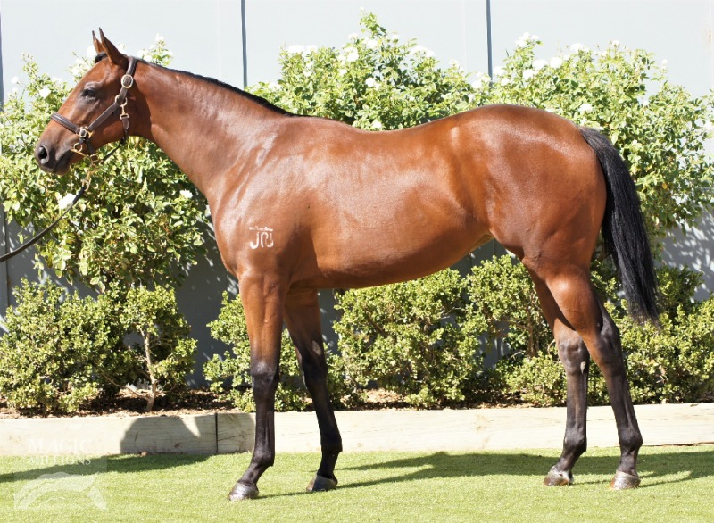 Deluxe Design at 2017 Adelaide Yearling Sale