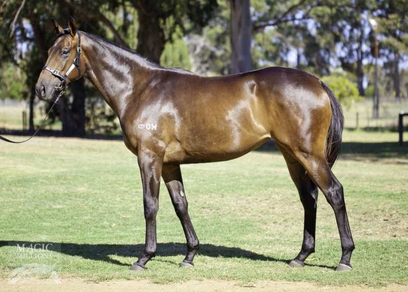 Heavenly Affair at 2017 Perth Yearling Sale