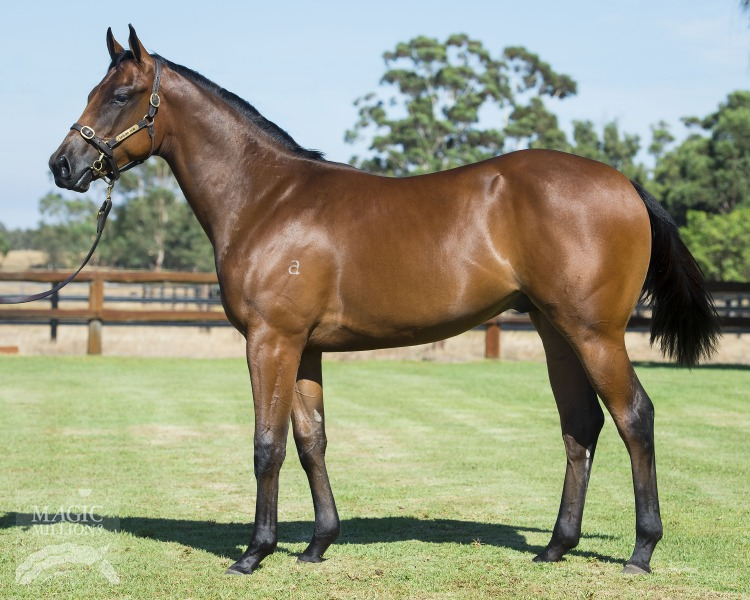 Indian Chant at 2017 Perth Yearling Sale