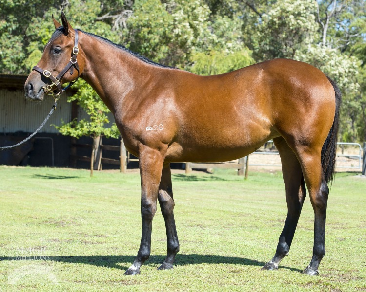 Why Choose Her at 2017 Perth Yearling Sale