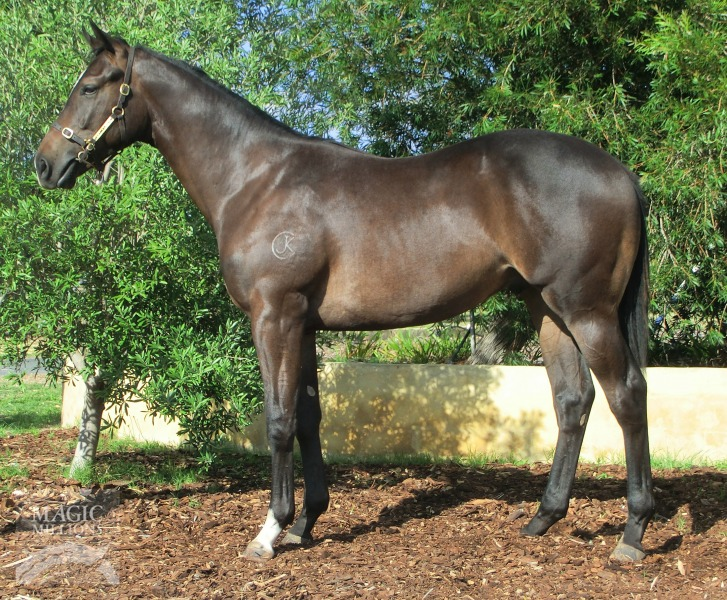 Kelly's Callisto at 2017 Perth Yearling Sale