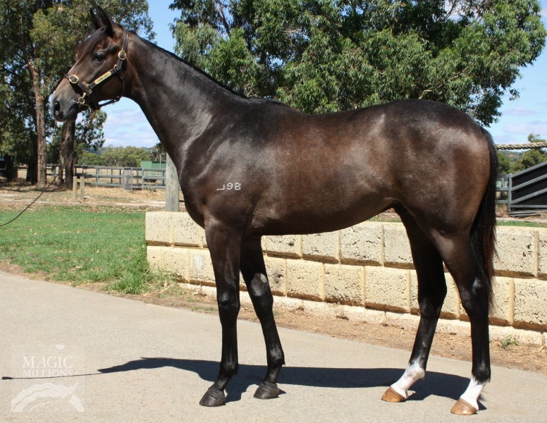 Without Reason at 2017 Perth Yearling Sale