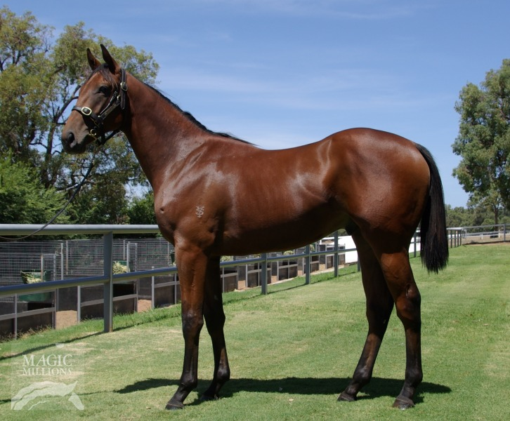 Fingermark at 2017 Perth Yearling Sale