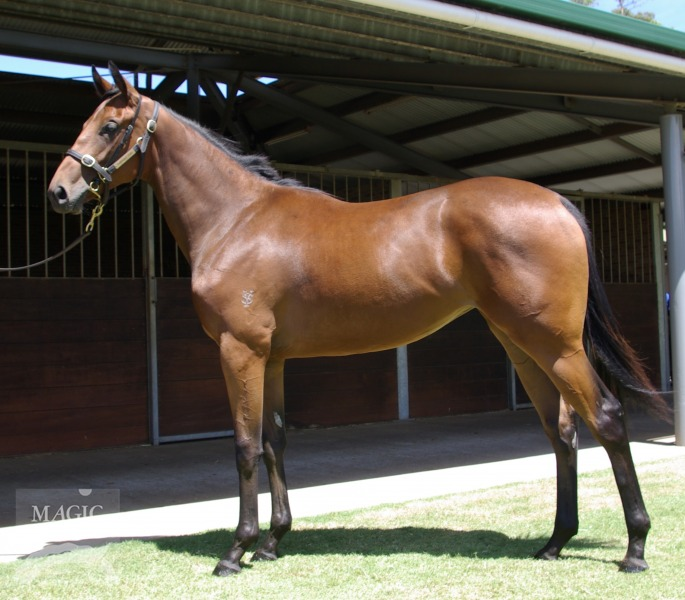 Amillionite at 2017 Perth Yearling Sale