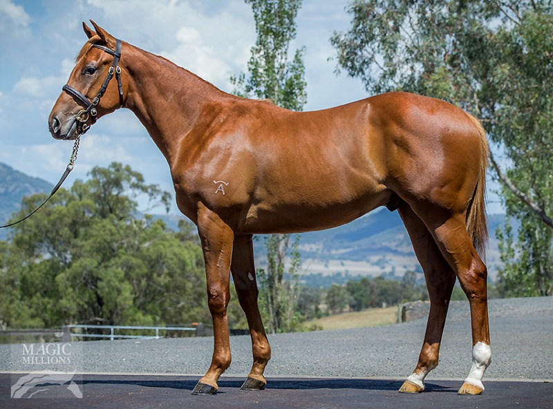 Jamaican Dream at 2017 Gold Coast Yearling Sale