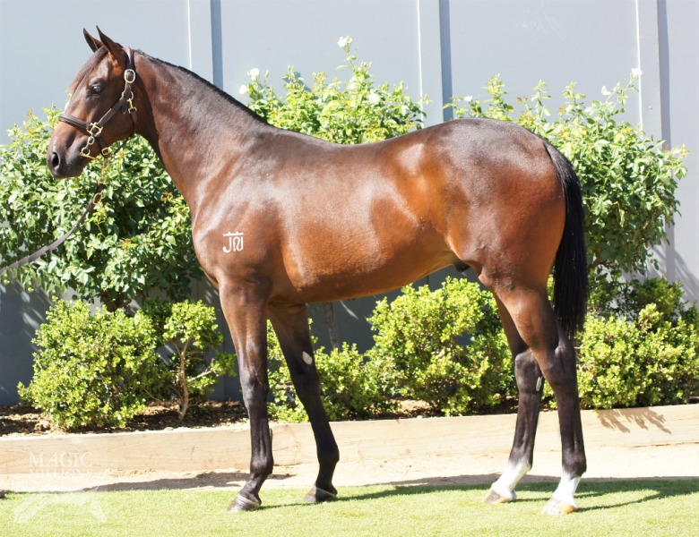 Bid To Fame at 2017 Gold Coast Yearling Sale