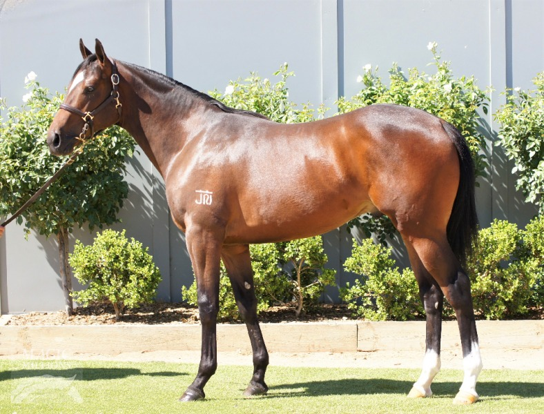 Tough Decision at 2017 Gold Coast Yearling Sale