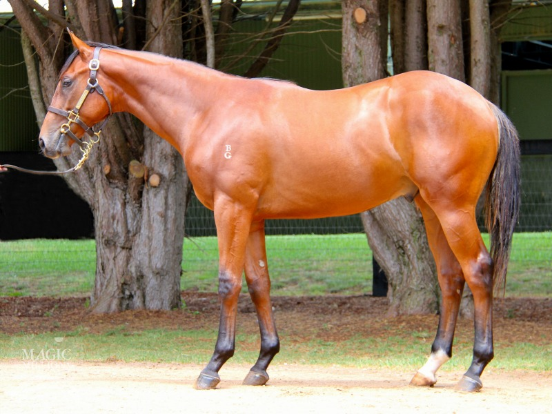 Battle Cry at 2017 Gold Coast Yearling Sale