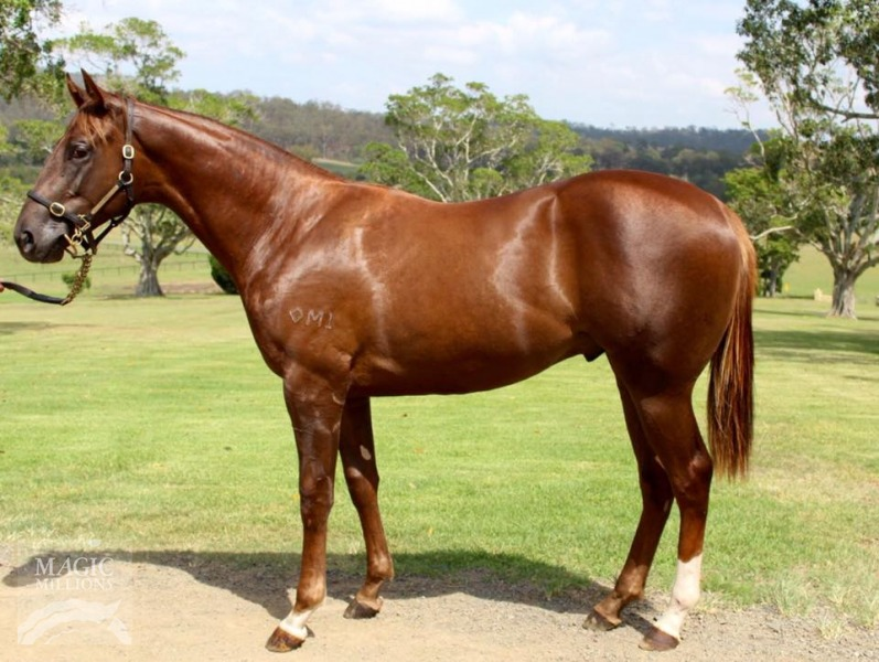 Acoustix at 2017 Gold Coast Yearling Sale