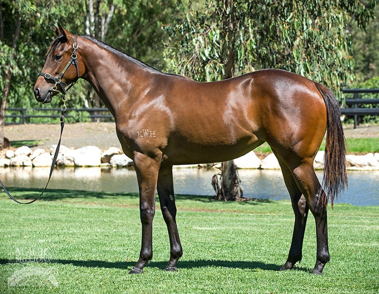 In Heart's Wake at 2017 Gold Coast Yearling Sale