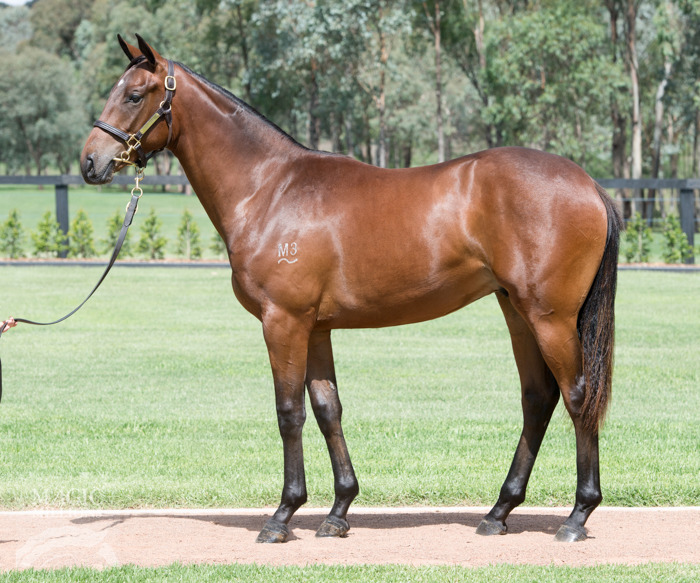 Dunkirk at 2017 Gold Coast Yearling Sale