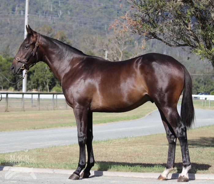 Champagne Vega at 2017 Gold Coast Yearling Sale