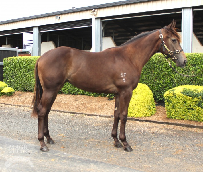 Pipe Dream Lass at 2017 Gold Coast Yearling Sale