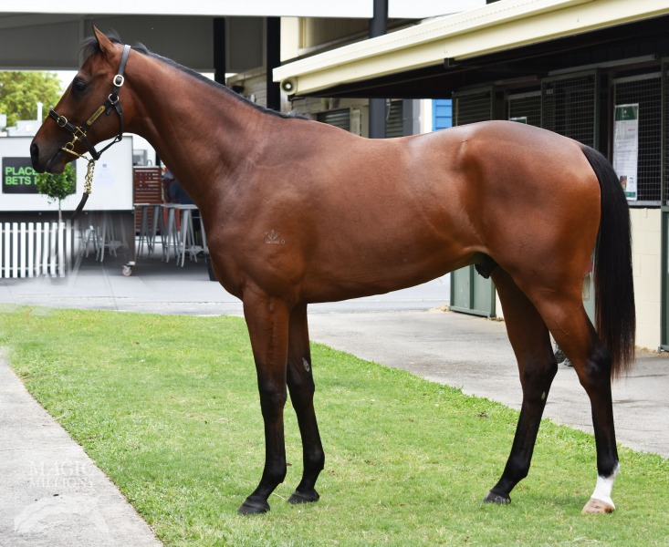 Whaler Bill at 2017 Gold Coast 2YOs In Training Sale