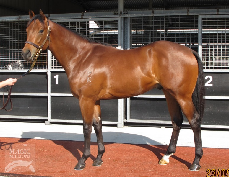 Delago Dehero at 2017 Gold Coast 2YOs In Training Sale