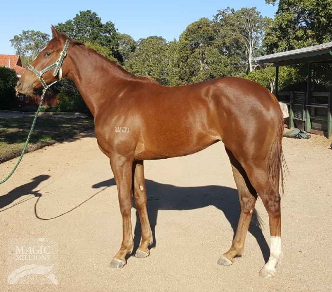 Lope For Joya at 2017 Gold Coast 2YOs In Training Sale