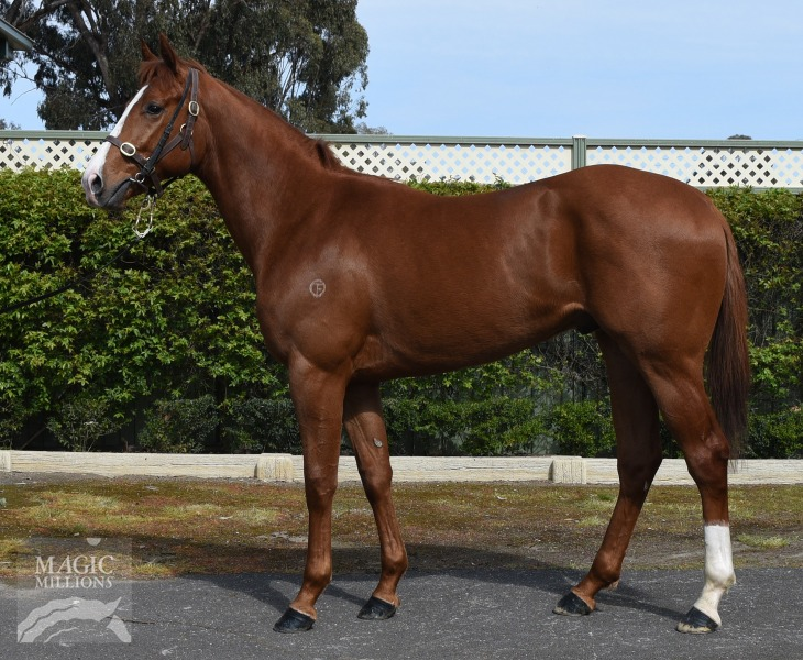 Vunivalu at 2017 Gold Coast 2YOs In Training Sale