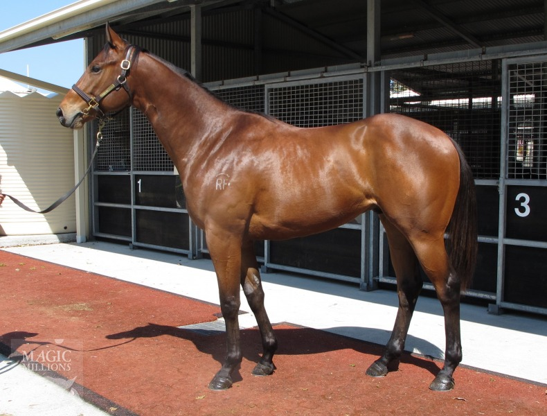 Crema On Jetty at 2017 Gold Coast 2YOs In Training Sale