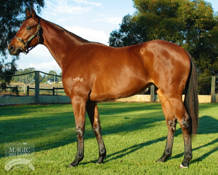 Looks Like Magic at 2017 Perth Winter Yearling Sale