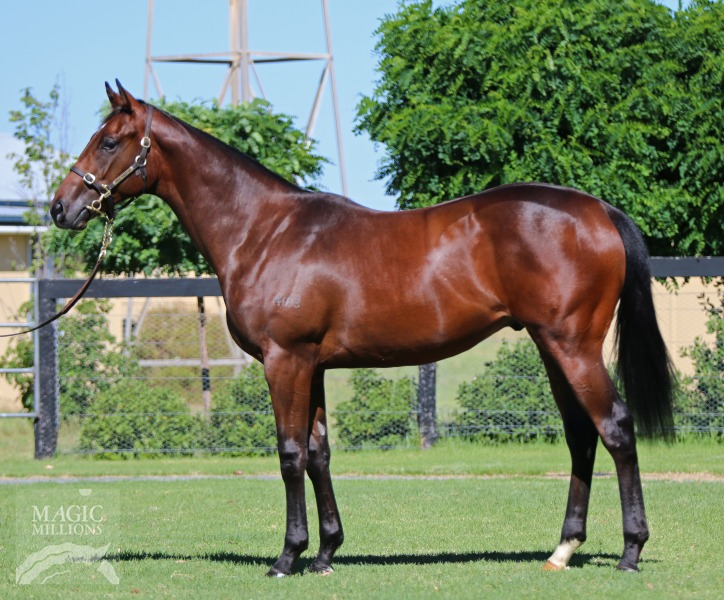Banquo at 2018 Gold Coast Yearling Sale