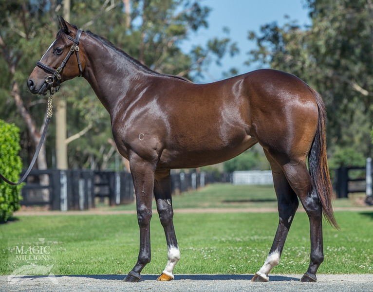 Iconic Star at 2018 Gold Coast Yearling Sale