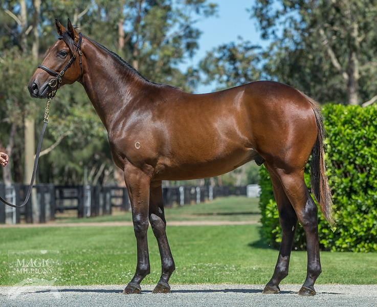 California August at 2018 Gold Coast Yearling Sale